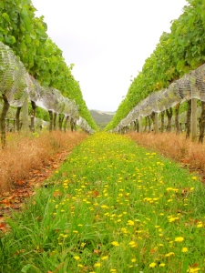 lush chardonnay