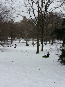 sledding in Central Park